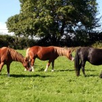 Horses at Pant Y Ffynnon