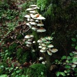 pyf forest mushrooms