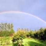 pyf garden rainbow